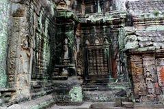 Templo de TA Prohm, Angkor, Camboya Imagen de archivo libre de regalías