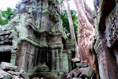 Templo de TA Prohm, Angkor, Camboya Fotografía de archivo