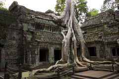 Templo de TA Prohm, Angkor Wat Imagenes de archivo