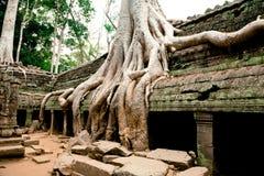 Templo de TA Prohm, Angkor Wat, Camboya Imágenes de archivo libres de regalías