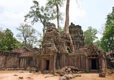 Templo de TA Prohm, Angkor Wat, Camboya Imagen de archivo libre de regalías