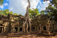 Templo de Ta Prohm, arquitetura antiga em Camboja imagem de stock royalty free