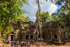 Templo de Ta Prohm, arquitetura antiga em Camboja foto de stock royalty free