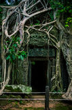 Templo de TA Prohm, Camboya Imagenes de archivo