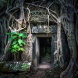 Templo de Ta Prohm com a árvore de banyan gigante no por do sol Angkor Wat, Cambodia Foto de Stock