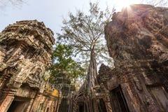 Templo de Ta Prohm em Angkor Wat, Siem Reap, Camboja. Imagem de Stock