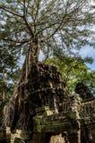 Templo de Ta Prohm em Cambodia Imagem de Stock Royalty Free