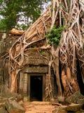 Templo de Ta Prohm em Camboja imagens de stock