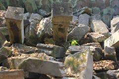 Templo de TA Prohm en Angkor, provincia de Siem Reap, Camboya Foto de archivo libre de regalías