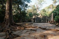 Templo de TA Prohm en el complejo de Angkor, Siem Reap, Camboya Fotografía de archivo libre de regalías