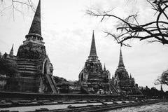 Templo de três pagodes em ayutthaya, Tailândia - branco e preto Fotos de Stock Royalty Free
