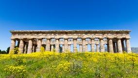 Templo del griego clásico de Segesta Imágenes de archivo libres de regalías