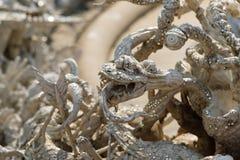 Templo del khun del rong de Wat en ChiangRai, Tailandia fotos de archivo libres de regalías