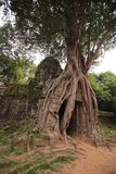 Templo del som de TA en Angkor Fotografía de archivo libre de regalías