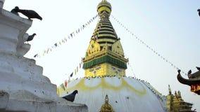 Templo do macaco com olhos da Buda vídeos de arquivo