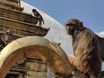 Templo do macaco - Kathmandu Nepal fotografia de stock