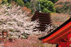 Templo e flor de cerejeira tradicionais japoneses Fotografia de Stock