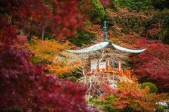 Templo em árvores de bordo, estação de Daigoji do momiji, Kyoto, Japão Foto de Stock Royalty Free