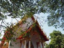Templo em Tailândia e em árvore Fotos de Stock