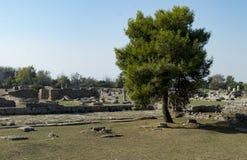 Templo grego Paestum Imagens de Stock Royalty Free