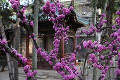 Templo halal de Xi'an foto de archivo libre de regalías