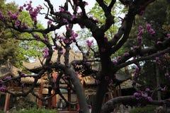 Templo halal de Xi'an fotos de archivo
