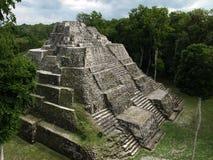 Templo maia em Yaxhá Fotos de Stock