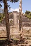 Templo maya Imágenes de archivo libres de regalías