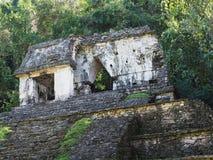 Templo na pirâmide rochoso no parque nacional maia antigo da cidade de Palenque no estado em México, paisagem de Chiapas da selva foto de stock royalty free