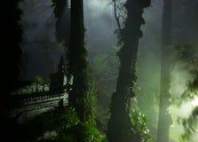 Templo ocultado en bosque místico foto de archivo
