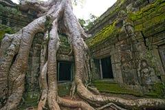 Templo Siem ReapCambodia de Ta Prohm fotos de stock