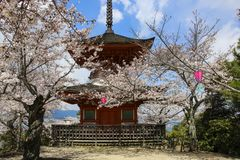 Templo sintoísta en la isla rodeada por los árboles del flor de Sakura, Japón de Miyajima foto de archivo libre de regalías