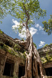 Templo Ta Prohm (Cambodia) imagem de stock