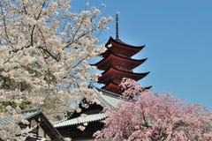 Templo y Sakura Fotos de archivo