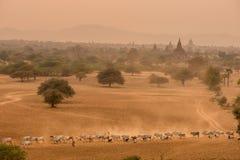 Templos antiguos Bagan Myanmar imagen de archivo