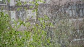 Tempo anormal A neve vai nas árvores verdes e sae em abril na mola Movimento lento video estoque