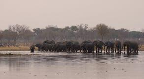 Tempo bevente dell'elefante Fotografia Stock Libera da Diritti
