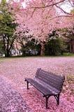 Tempo da flor de cerejeira Fotos de Stock