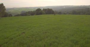 Tempo da noite da vista aérea Migrar sobre um verde gramíneo no montes 4K vídeos de arquivo