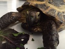 Tempo da tartaruga Fotografia de Stock Royalty Free