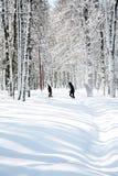 Tempo de abril no bosque do vidoeiro Fotografia de Stock
