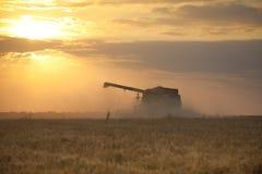 Tempo de colheita Imagem de Stock