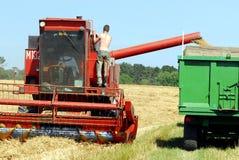 Tempo de colheita Fotos de Stock