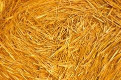Tempo de colheita Foto de Stock Royalty Free