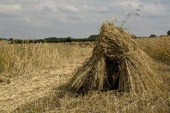 Tempo de colheita. Fotografia de Stock