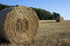 Tempo de colheita. Fotos de Stock