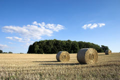 Tempo de colheita. Foto de Stock Royalty Free