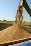 Tempo de colheita Imagem de Stock Royalty Free
