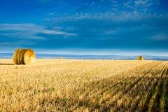 Tempo de colheita Fotografia de Stock