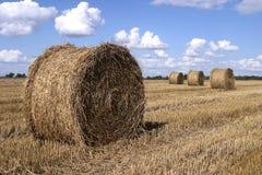 Tempo de colheita Foto de Stock
